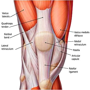 knee anatomy - pro knee pain relief, Human Body